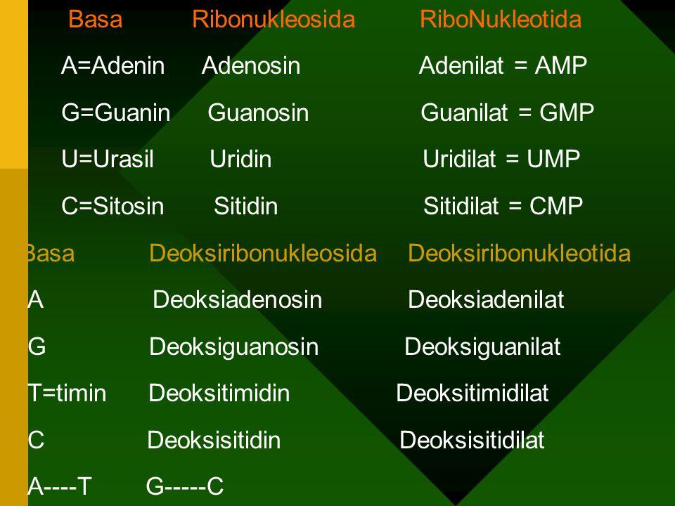 PURIN & PIRIMIDIN * Senyawa heterosiklik yg mengandung N atau disebut BASA N : Basa purin : Adenin (A) Guanin (G) Basa pirimidin : Timin (T) Sitosin (C) Urasil (U) * Nukleosida = Basa N + gula * Nukleotida = Basa N + gula + fosfat = nukleosida + fosfat