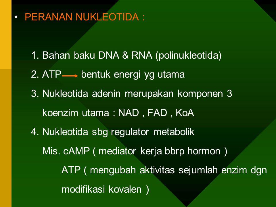 Basa Ribonukleosida RiboNukleotida A=Adenin Adenosin Adenilat = AMP G=Guanin Guanosin Guanilat = GMP U=Urasil Uridin Uridilat = UMP C=Sitosin Sitidin Sitidilat = CMP Basa Deoksiribonukleosida Deoksiribonukleotida A Deoksiadenosin Deoksiadenilat G Deoksiguanosin Deoksiguanilat T=timin Deoksitimidin Deoksitimidilat C Deoksisitidin Deoksisitidilat A----T G-----C