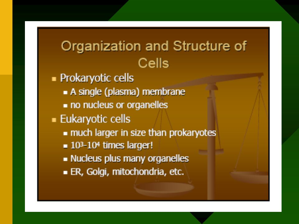 Biology and Chemistry Background Biology Prokaryotes vs Eukaryotes Organelle Functions Chemistry Bonds