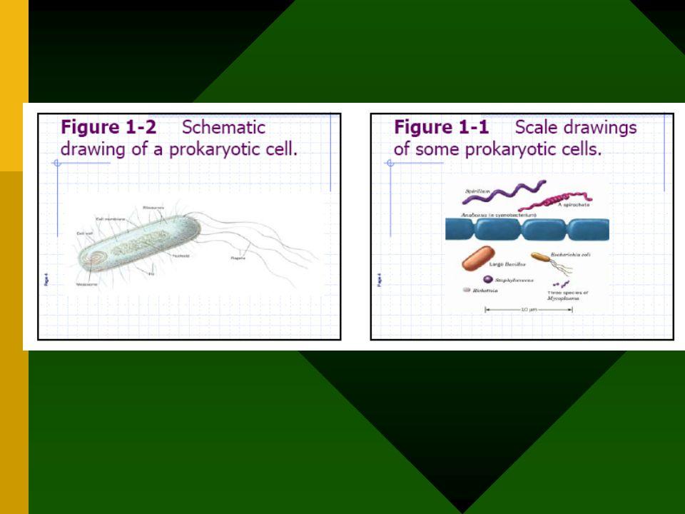 MAKROMOLEKUL KEBANYAKAN MERUPAKAN POLIMER Contoh : Protein rangkaian asam amino Polisakarida rangkaian monosakarida monomer hidrolisis sintesis H2O polimer