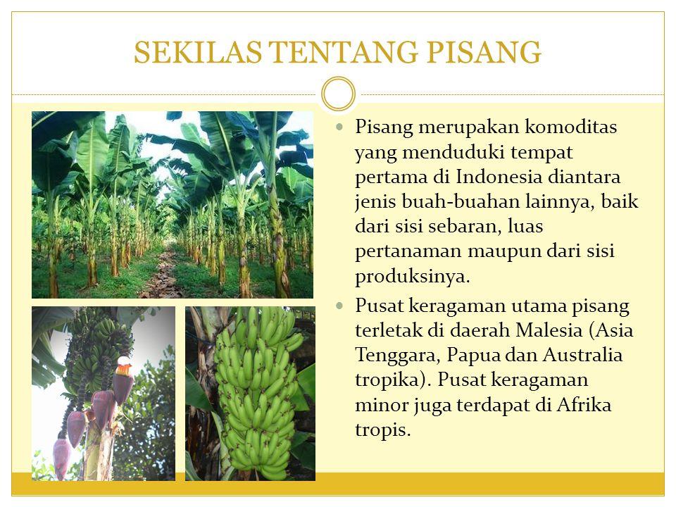 BOTANI TANAMAN PISANG Tanaman pisang termasuk dalam golongan terna monokotil tahunan berbentuk pohon yang tersusun atas batang semu.