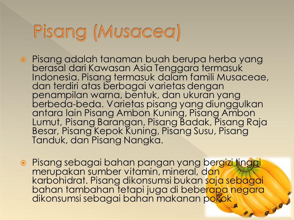  Pisang adalah tanaman buah berupa herba yang berasal dari Kawasan Asia Tenggara termasuk Indonesia. Pisang termasuk dalam famili Musaceae, dan terdi