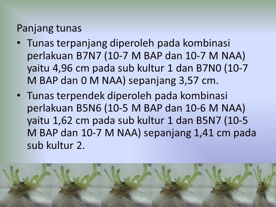 Panjang tunas Tunas terpanjang diperoleh pada kombinasi perlakuan B7N7 (10-7 M BAP dan 10-7 M NAA) yaitu 4,96 cm pada sub kultur 1 dan B7N0 (10-7 M BA