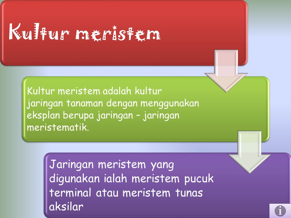 Kultur meristem Kultur meristem adalah kultur jaringan tanaman dengan menggunakan eksplan berupa jaringan – jaringan meristematik. Jaringan meristem y