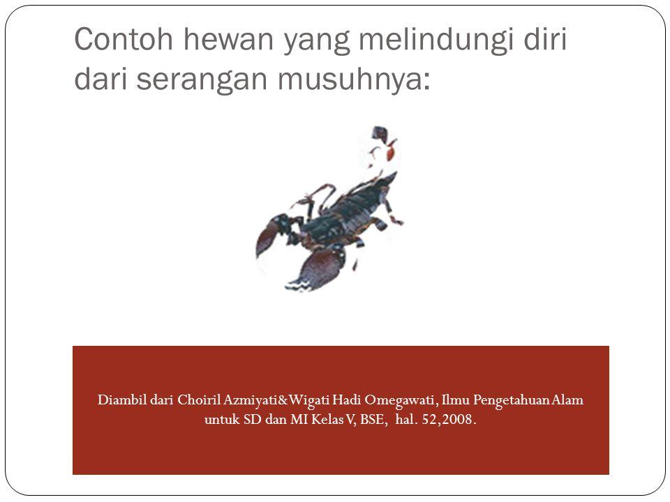 Contoh hewan yang melindungi diri dari serangan musuhnya: Diambil dari Choiril Azmiyati&Wigati Hadi Omegawati, Ilmu Pengetahuan Alam untuk SD dan MI Kelas V, BSE, hal.