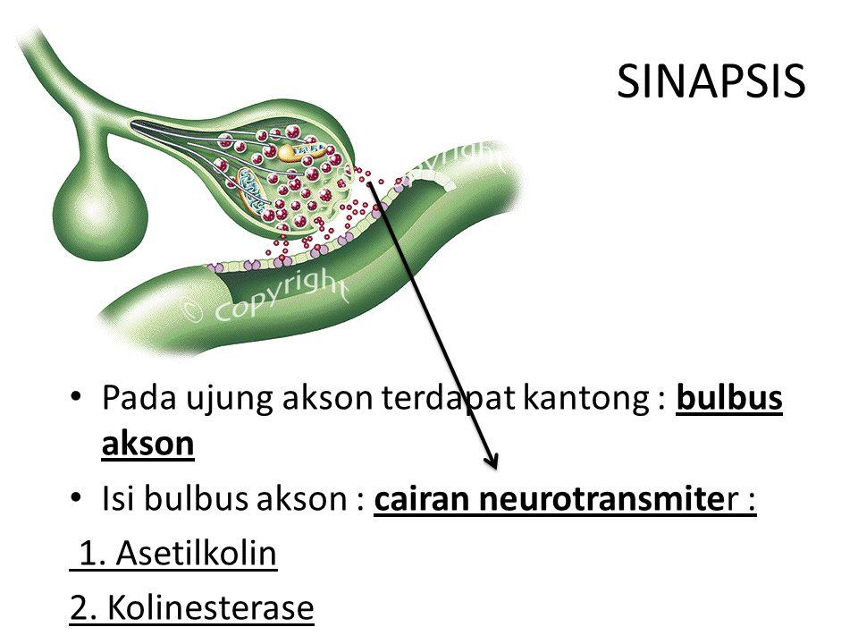 SINAPSIS Pada ujung akson terdapat kantong : bulbus akson Isi bulbus akson : cairan neurotransmiter : 1. Asetilkolin 2. Kolinesterase