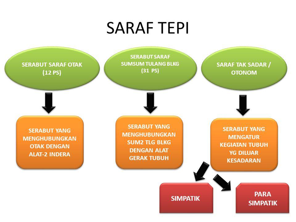 SARAF TEPI SERABUT SARAF OTAK (12 PS) SERABUT SARAF OTAK (12 PS) SARAF TAK SADAR / OTONOM SERABUT SARAF SUMSUM TULANG BLKG (31 PS) SERABUT SARAF SUMSU