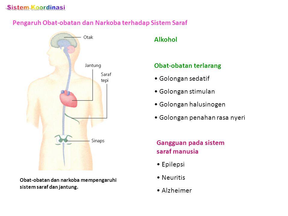 Pengaruh Obat-obatan dan Narkoba terhadap Sistem Saraf Obat-obatan dan narkoba mempengaruhi sistem saraf dan jantung. Alkohol Obat-obatan terlarang Go