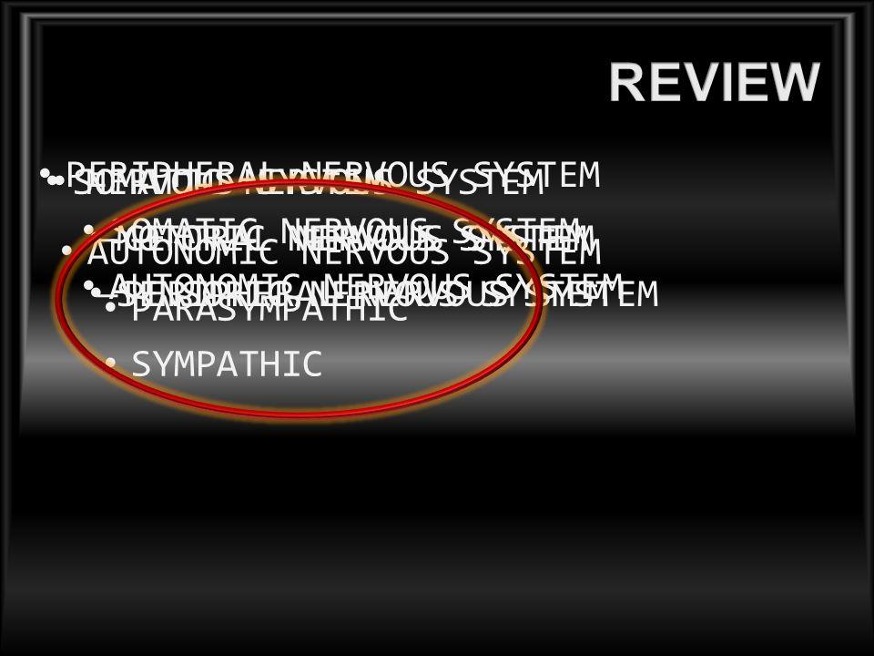 NERVOUS SYSTEM – CENTRAL NERVOUS SYSTEM – PERIPHERAL NERVOUS SYSTEM PERIPHERAL NERVOUS SYSTEM SOMATIC NERVOUS SYSTEM AUTONOMIC NERVOUS SYSTEM SOMATIC