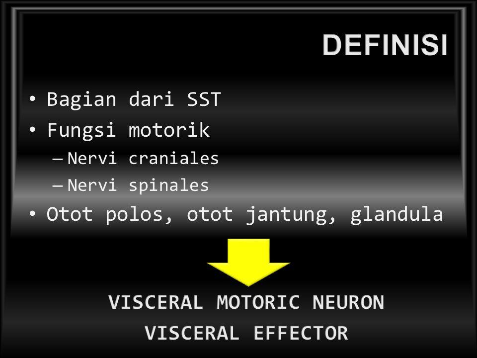 Bagian dari SST Fungsi motorik – Nervi craniales – Nervi spinales Otot polos, otot jantung, glandula