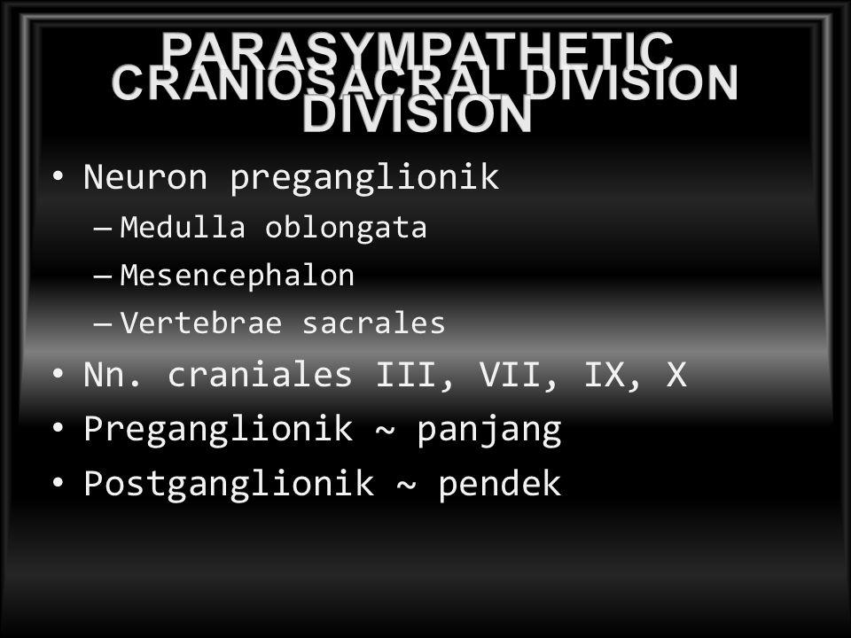 Neuron preganglionik – Medulla oblongata – Mesencephalon – Vertebrae sacrales Nn. craniales III, VII, IX, X Preganglionik ~ panjang Postganglionik ~ p