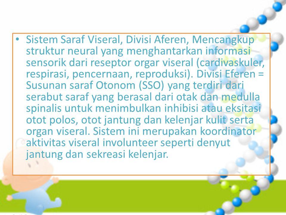Sistem Saraf Viseral, Divisi Aferen, Mencangkup struktur neural yang menghantarkan informasi sensorik dari reseptor orgar viseral (cardivaskuler, respirasi, pencernaan, reproduksi).