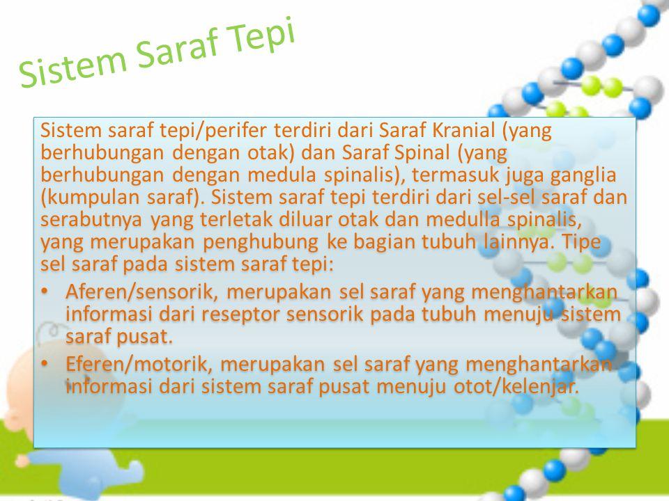 Sistem Saraf Tepi Sistem saraf tepi/perifer terdiri dari Saraf Kranial (yang berhubungan dengan otak) dan Saraf Spinal (yang berhubungan dengan medula spinalis), termasuk juga ganglia (kumpulan saraf).