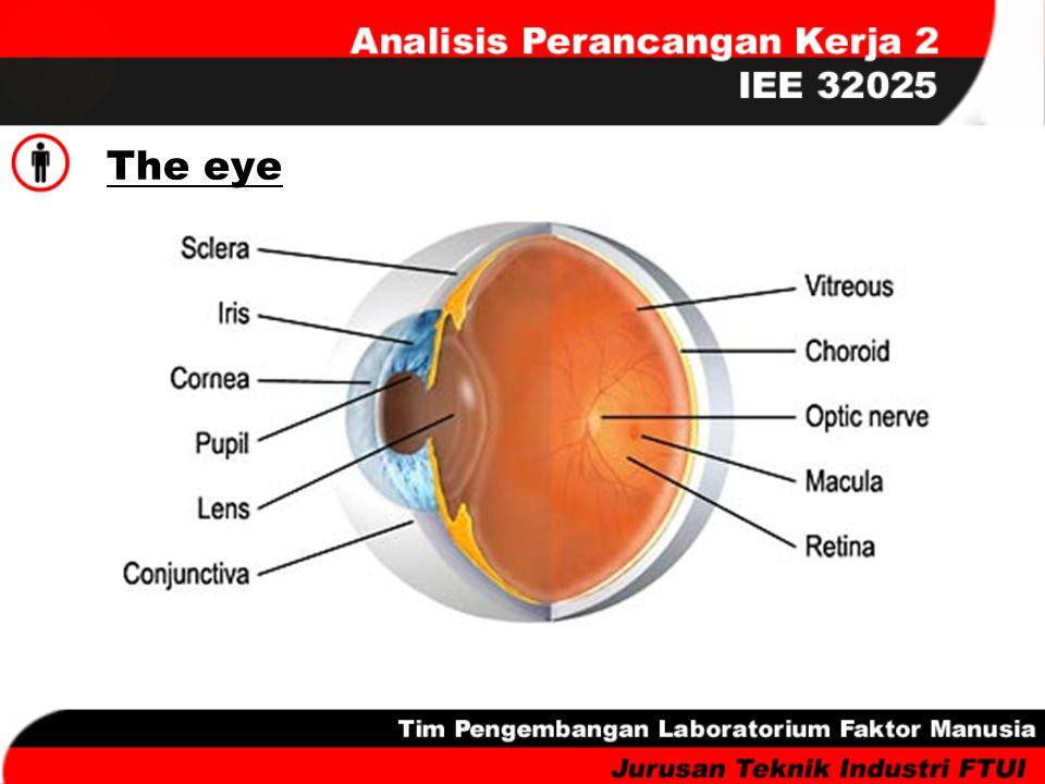 Contrast Sensitivity Visual displays refer to any visual presentation of information.