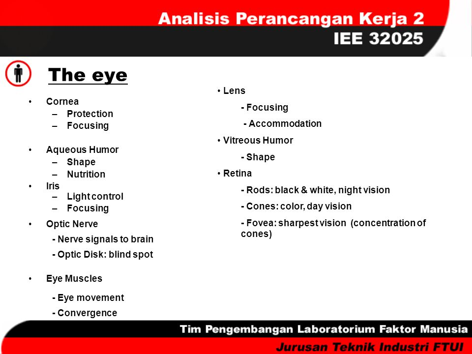 The eye Cornea –Protection –Focusing Aqueous Humor –Shape –Nutrition Iris –Light control –Focusing Optic Nerve - Nerve signals to brain - Optic Disk: