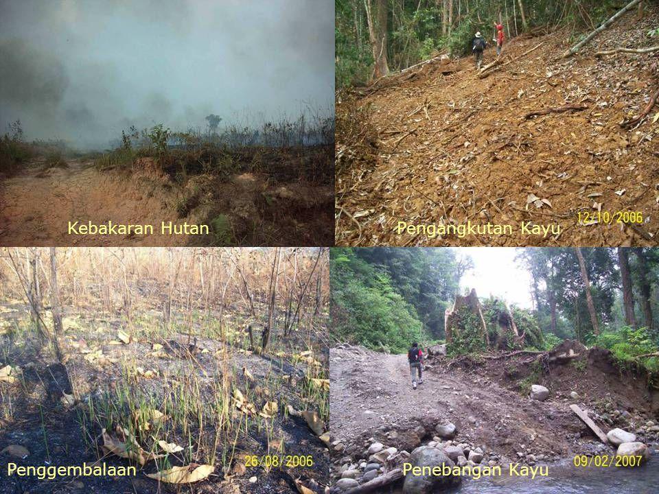 Kebakaran HutanPengangkutan Kayu PenggembalaanPenebangan Kayu
