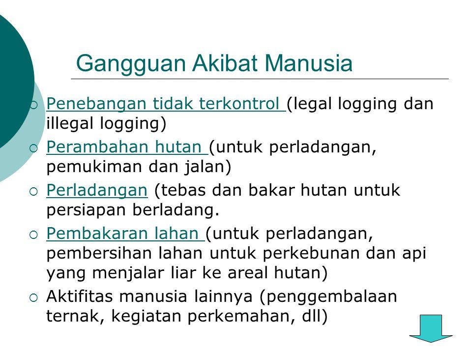 Gangguan Akibat Manusia  Penebangan tidak terkontrol (legal logging dan illegal logging) Penebangan tidak terkontrol  Perambahan hutan (untuk perladangan, pemukiman dan jalan) Perambahan hutan  Perladangan (tebas dan bakar hutan untuk persiapan berladang.