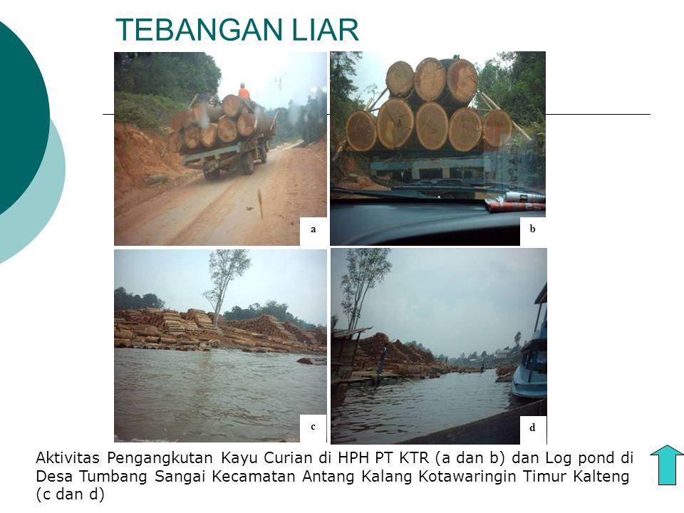 TEBANGAN LIAR a d b c Aktivitas Pengangkutan Kayu Curian di HPH PT KTR (a dan b) dan Log pond di Desa Tumbang Sangai Kecamatan Antang Kalang Kotawarin