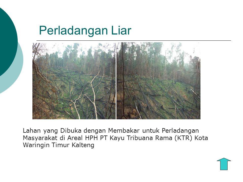 Perladangan Liar Lahan yang Dibuka dengan Membakar untuk Perladangan Masyarakat di Areal HPH PT Kayu Tribuana Rama (KTR) Kota Waringin Timur Kalteng
