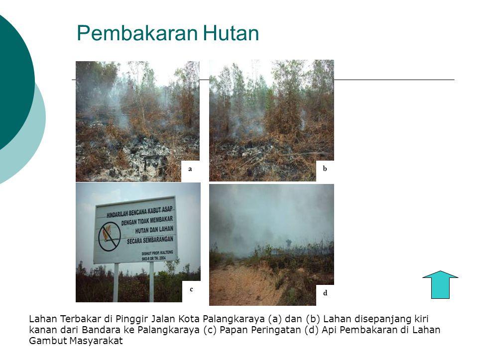 Pembakaran Hutan ab d c Lahan Terbakar di Pinggir Jalan Kota Palangkaraya (a) dan (b) Lahan disepanjang kiri kanan dari Bandara ke Palangkaraya (c) Papan Peringatan (d) Api Pembakaran di Lahan Gambut Masyarakat
