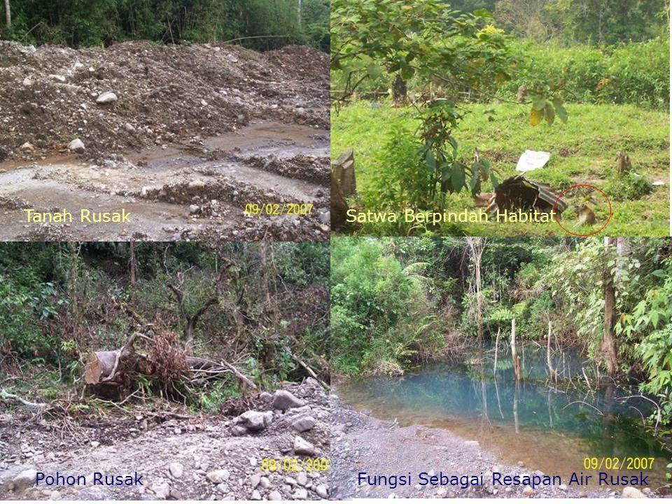 Tanah Rusak Satwa Berpindah Habitat Pohon Rusak Fungsi Sebagai Resapan Air Rusak