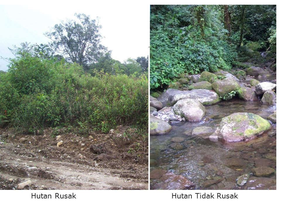 Komponen Hutan  Biotik = tumbuhan (didominasi oleh pohon), satwa dan manusia.
