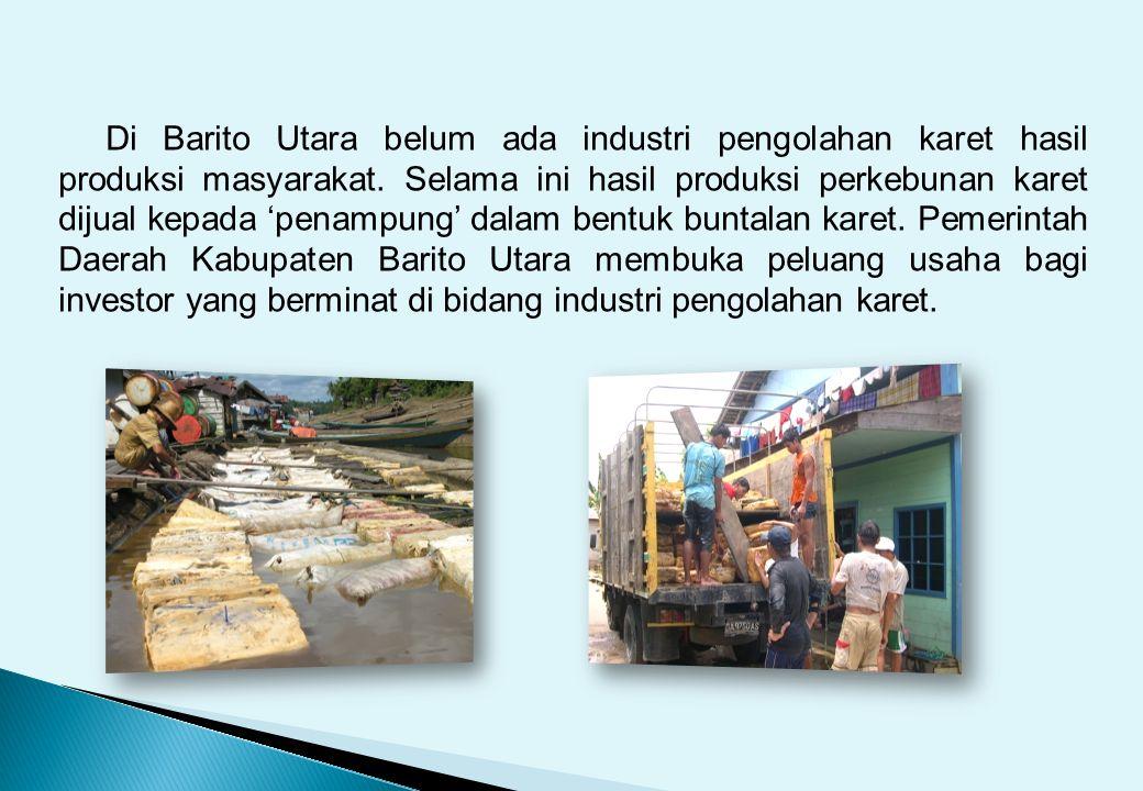 Di Barito Utara belum ada industri pengolahan karet hasil produksi masyarakat. Selama ini hasil produksi perkebunan karet dijual kepada 'penampung' da
