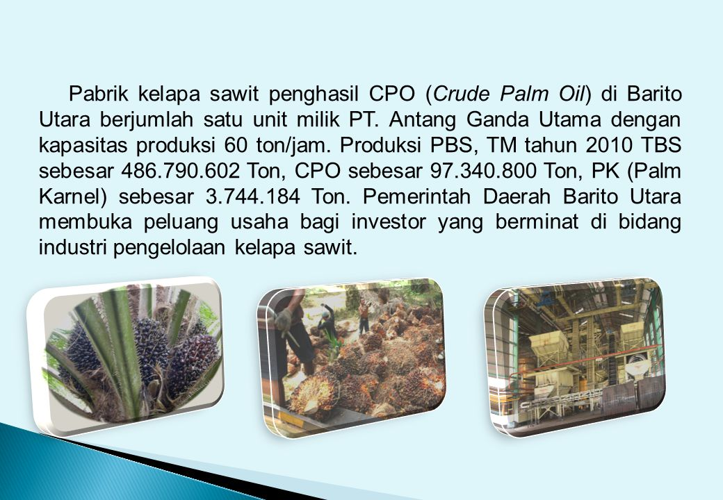 Pabrik kelapa sawit penghasil CPO (Crude Palm Oil) di Barito Utara berjumlah satu unit milik PT. Antang Ganda Utama dengan kapasitas produksi 60 ton/j