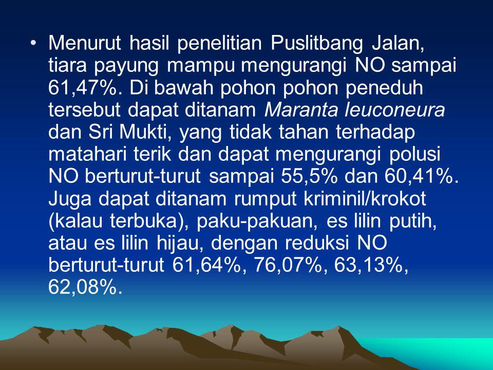 Menurut hasil penelitian Puslitbang Jalan, tiara payung mampu mengurangi NO sampai 61,47%. Di bawah pohon pohon peneduh tersebut dapat ditanam Maranta