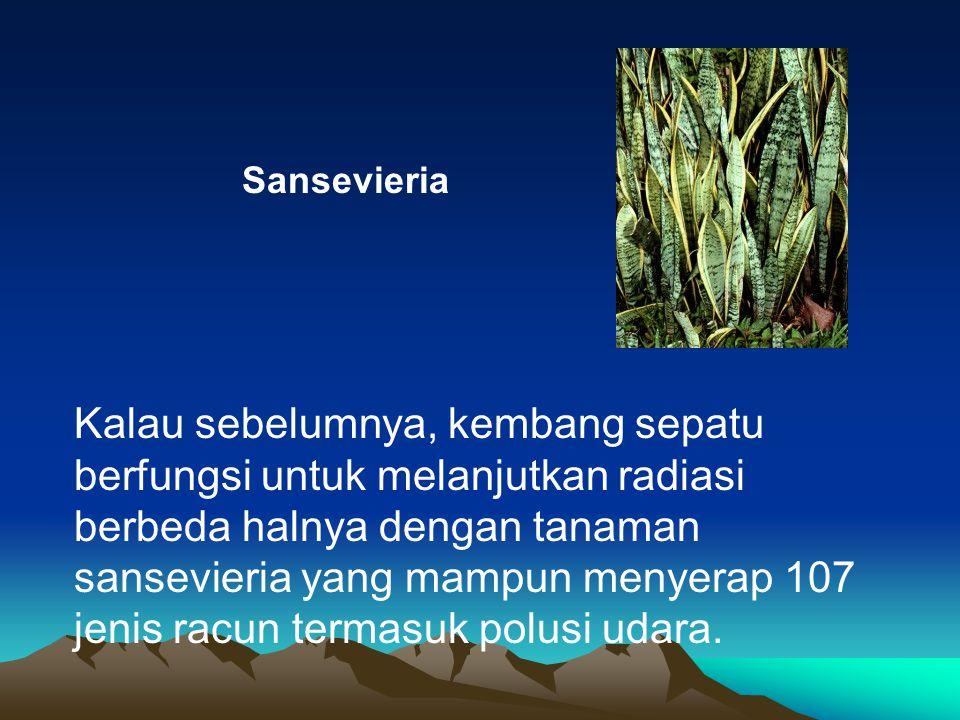 Sansevieria Kalau sebelumnya, kembang sepatu berfungsi untuk melanjutkan radiasi berbeda halnya dengan tanaman sansevieria yang mampun menyerap 107 je