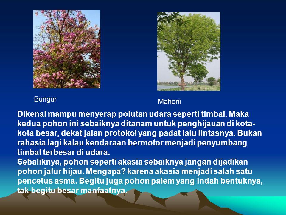 Mahoni Bungur Dikenal mampu menyerap polutan udara seperti timbal. Maka kedua pohon ini sebaiknya ditanam untuk penghijauan di kota- kota besar, dekat