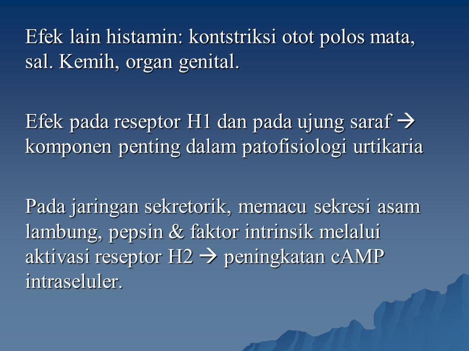 Efek lain histamin: kontstriksi otot polos mata, sal. Kemih, organ genital. Efek pada reseptor H1 dan pada ujung saraf  komponen penting dalam patofi