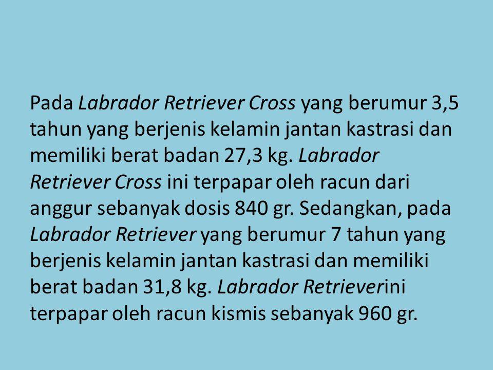 Pada Labrador Retriever Cross yang berumur 3,5 tahun yang berjenis kelamin jantan kastrasi dan memiliki berat badan 27,3 kg.