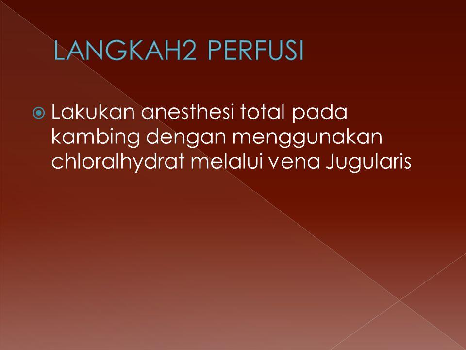  Lakukan anesthesi total pada kambing dengan menggunakan chloralhydrat melalui vena Jugularis