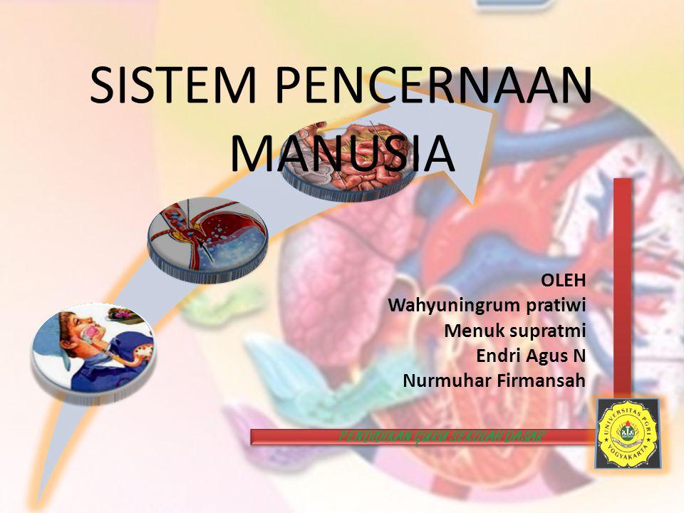 PENCERNAAN MANUSIA Poses mengubah makanan dari ukuran besar menjadi ukuran yang lebih kecil dan halus, serta memecah molekul makanan yang kompleks menjadi molekul yang sederhana dengan menggunakan enzim dan organ-organ pencernaan.