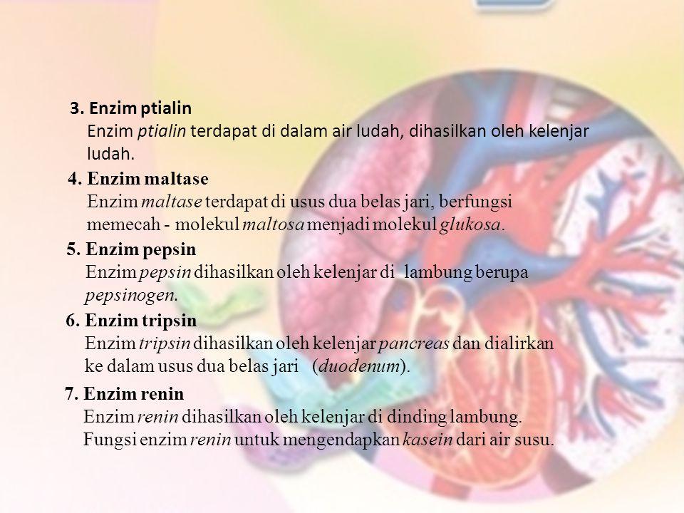 3. Enzim ptialin Enzim ptialin terdapat di dalam air ludah, dihasilkan oleh kelenjar ludah. 4. Enzim maltase Enzim maltase terdapat di usus dua belas