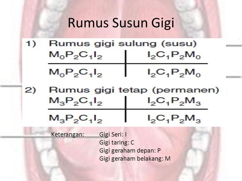 Rumus Susun Gigi Keterangan:Gigi Seri: I Gigi taring: C Gigi geraham depan: P Gigi geraham belakang: M