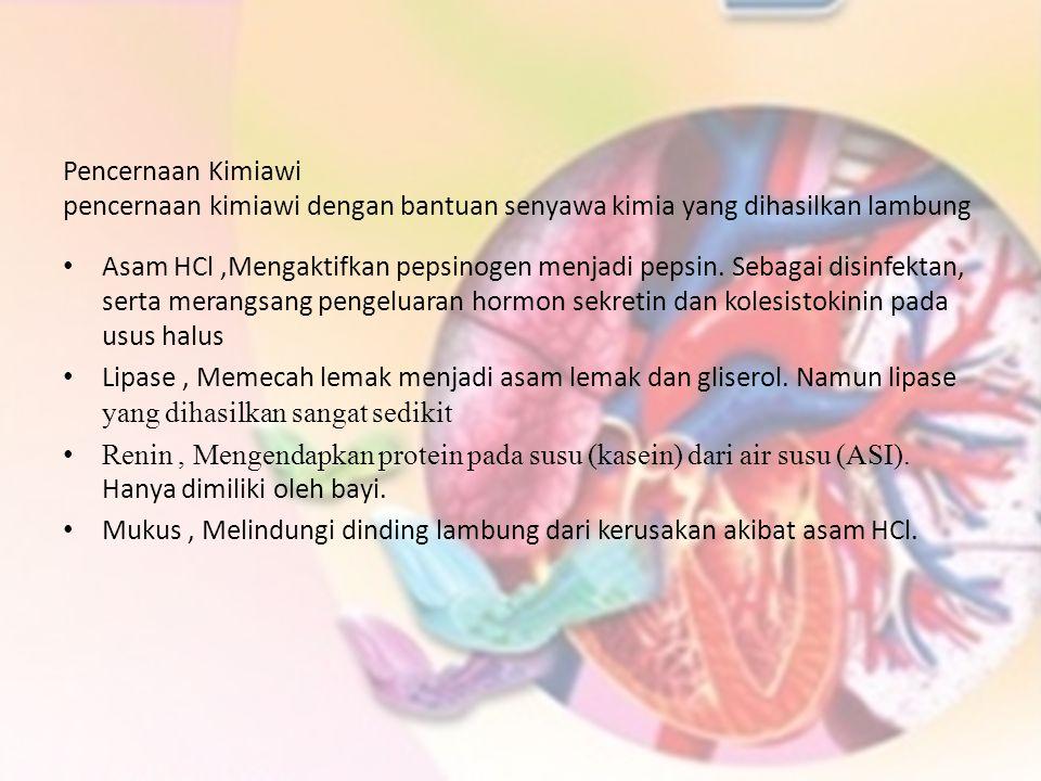 Asam HCl,Mengaktifkan pepsinogen menjadi pepsin. Sebagai disinfektan, serta merangsang pengeluaran hormon sekretin dan kolesistokinin pada usus halus
