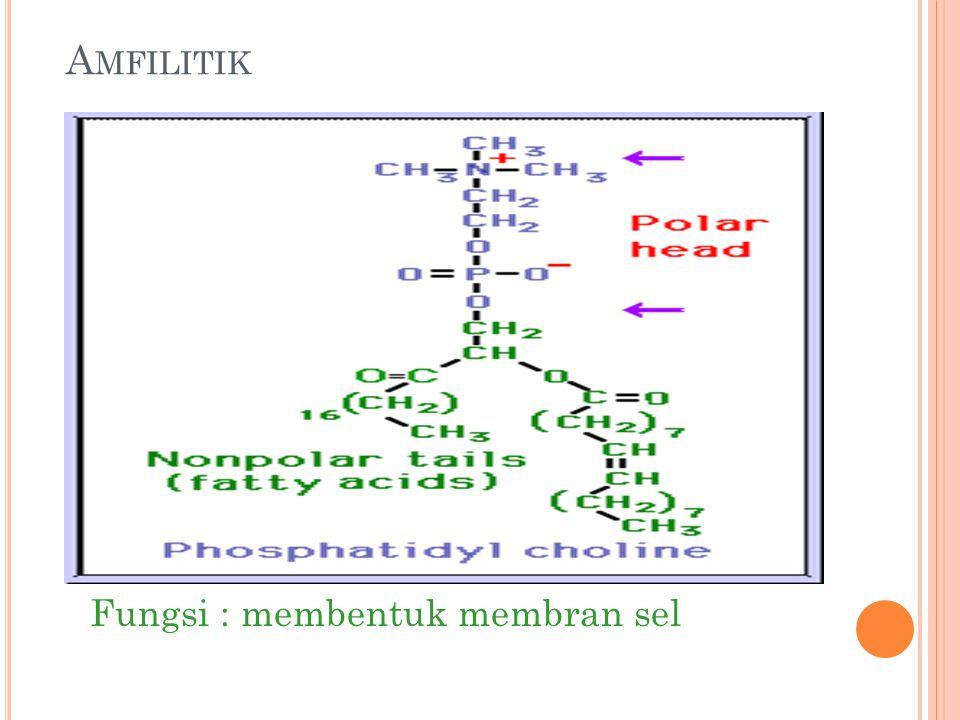 A MFILITIK Fungsi : membentuk membran sel
