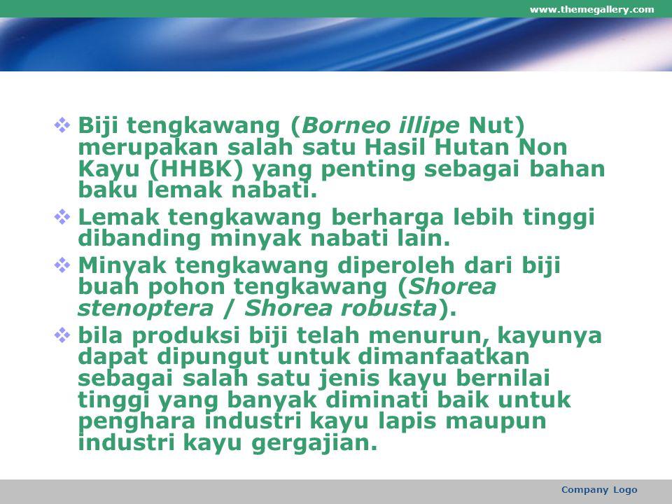www.themegallery.com Company Logo  Biji tengkawang (Borneo illipe Nut) merupakan salah satu Hasil Hutan Non Kayu (HHBK) yang penting sebagai bahan ba