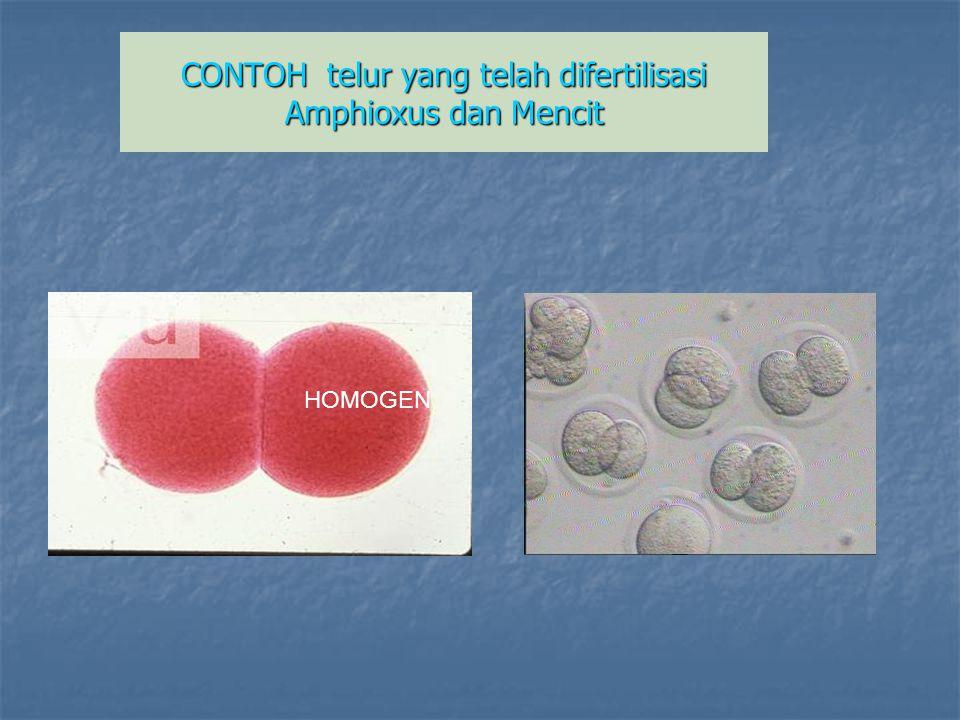 CONTOH telur yang telah difertilisasi Amphioxus dan Mencit HOMOGEN