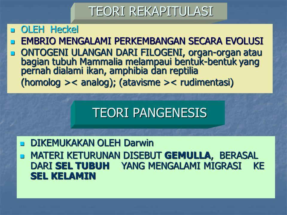 TEORI REKAPITULASI OLEH Heckel OLEH Heckel EMBRIO MENGALAMI PERKEMBANGAN SECARA EVOLUSI EMBRIO MENGALAMI PERKEMBANGAN SECARA EVOLUSI ONTOGENI ULANGAN