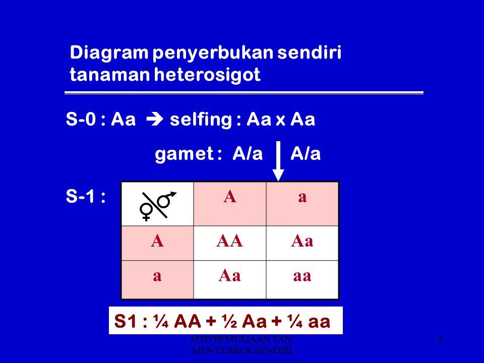 MTD PEMULIAAN TAN. MENYERBUK SENDIRI 5 Diagram penyerbukan sendiri tanaman heterosigot Aa AAAAa a aa S1 : ¼ AA + ½ Aa + ¼ aa S-0 : Aa  selfing : Aa x