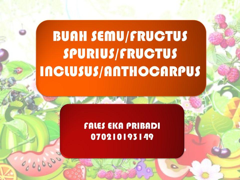 FALES EKA PRIBADI 070210193149 FALES EKA PRIBADI 070210193149 BUAH SEMU/FRUCTUS SPURIUS/FRUCTUS INCLUSUS/ANTHOCARPUS