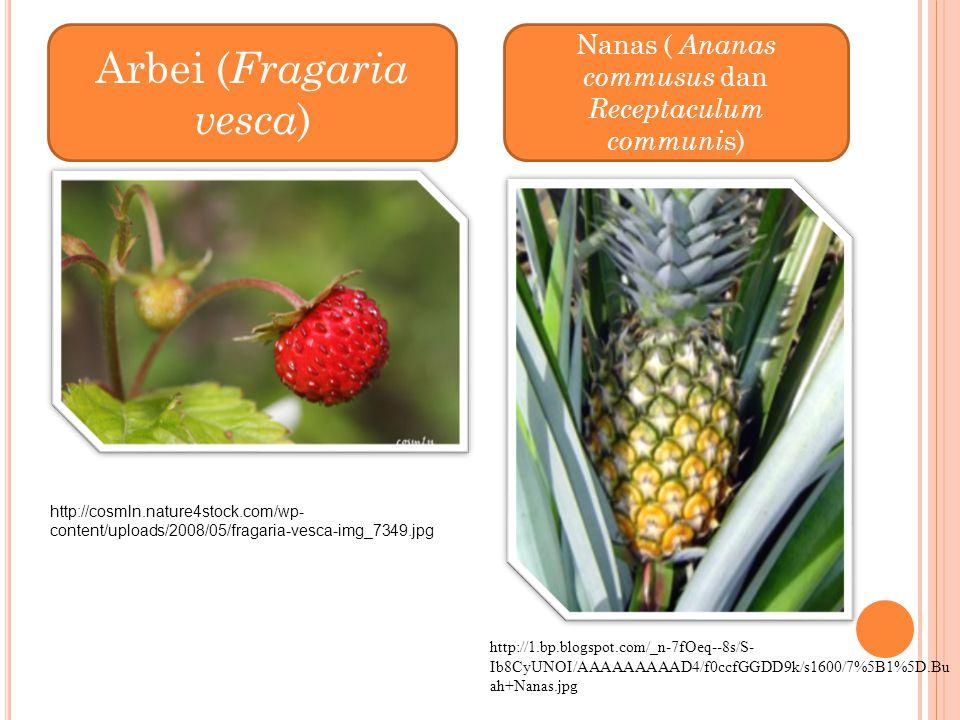 Nanas ( Ananas commusus dan Receptaculum communi s) http://1.bp.blogspot.com/_n-7fOeq--8s/S- Ib8CyUNOI/AAAAAAAAAD4/f0ccfGGDD9k/s1600/7%5B1%5D.Bu ah+Na