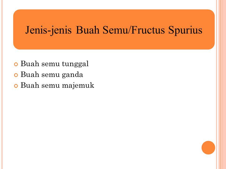 Buah semu tunggal Buah semu ganda Buah semu majemuk Jenis-jenis Buah Semu/Fructus Spurius