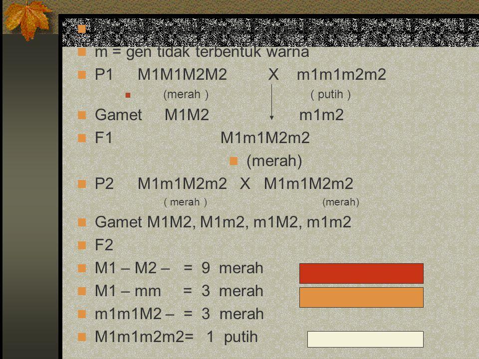 M = gen untuk warna bunga merah m = gen tidak terbentuk warna P1 M1M1M2M2X m1m1m2m2 (merah ) ( putih ) Gamet M1M2 m1m2 F1M1m1M2m2 (merah) P2 M1m1M2m2