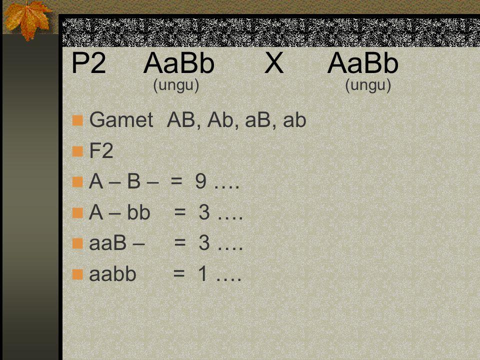 P2 AaBb X AaBb GametAB, Ab, aB, ab F2 A – B – = 9 …. A – bb = 3 …. aaB – = 3 …. aabb = 1 …. (ungu)