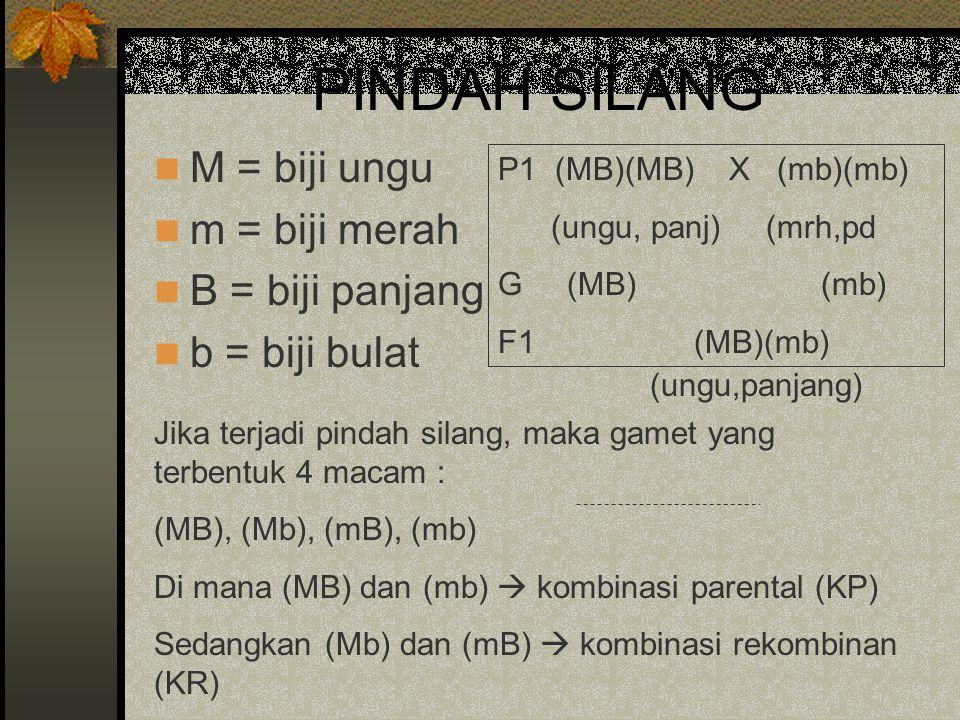 PINDAH SILANG M = biji ungu m = biji merah B = biji panjang b = biji bulat P1 (MB)(MB) X (mb)(mb) (ungu, panj) (mrh,pd G (MB) (mb) F1 (MB)(mb) Jika te