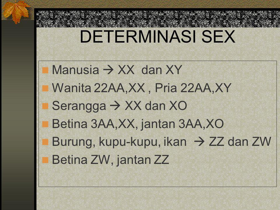 DETERMINASI SEX Manusia  XX dan XY Wanita 22AA,XX, Pria 22AA,XY Serangga  XX dan XO Betina 3AA,XX, jantan 3AA,XO Burung, kupu-kupu, ikan  ZZ dan ZW
